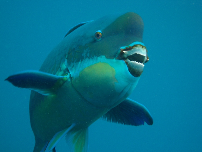 The Parrotfish Bite, Greedy Slugs, Lefty Whales and Other Amazing Animals