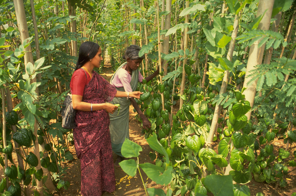 What We Can Learn From the Tribals About Forests as a Source of Food Security